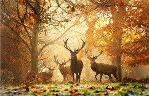 fall-photos-autumn-pictures-4-750x487